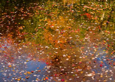 Fallen leaves and reflections in the pond under the footbridge, Somesville, Mount Desert Island, Maine, USA