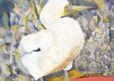"Nazca Booby, mixed media on mylar, 40"" x 52"""