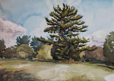 Lansdowne Tree, watercolor on paper, 18 x 24""