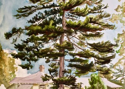 Sea Fox Tree at College of the Atlantic, watercolor on paper, 24x18""