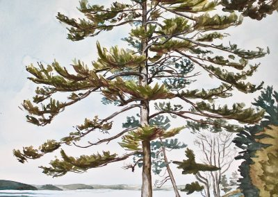 Sargent Drive Tall Tree, watercolor and gouache on paper, 25x19""