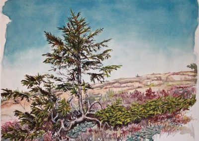 *SOLD* Sargent Peak Tree, watercolor and gouache on paper, 19 x 25""