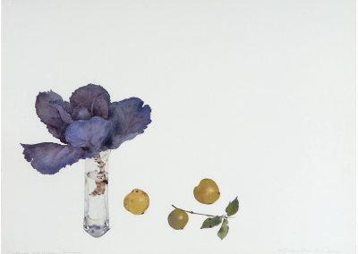 """*SOLD* Cabbage and Quince, November, watercolor on Arches paper, 23 x 30"""""""