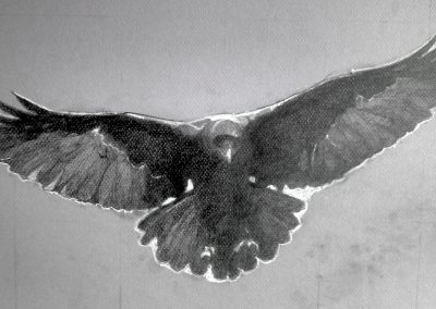 """Flying Raven Study, graphite and conté on board, 12 x 18"""""""