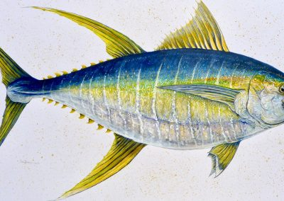"""Yellowfin Tuna, acrylic and watercolor on paperboard, 32 x 20"""""""