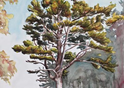"""South Shore Tree, watercolor and gouache on paper, 26x18.5"""""""